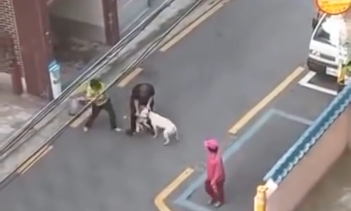 「リードは絶対に短く持って欲しい」大型犬にかみ殺されたマルチーズ。飼い主の悲痛な叫び