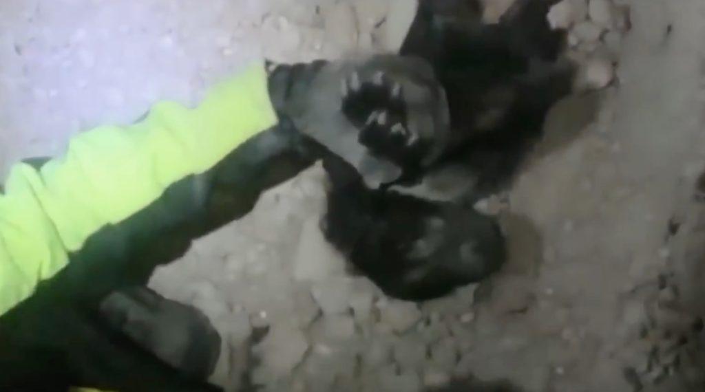 【イタリア地震】瓦礫に閉じ込められていた子犬が2日ぶりに救出される!ここまで埋まった状態からよく生還したな^ ^