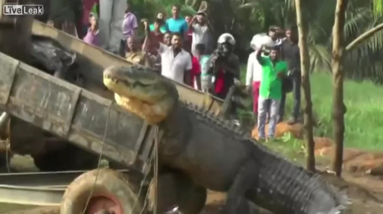 スリランカで恐竜レベルの巨大ワニが捕獲!しかし人々の対応は寛大だった!!
