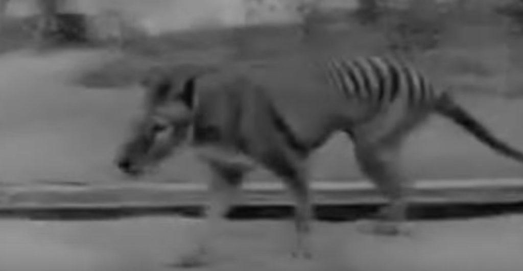 こんな動物見たことない!現在では絶滅した動物たちの動いている映像集!!