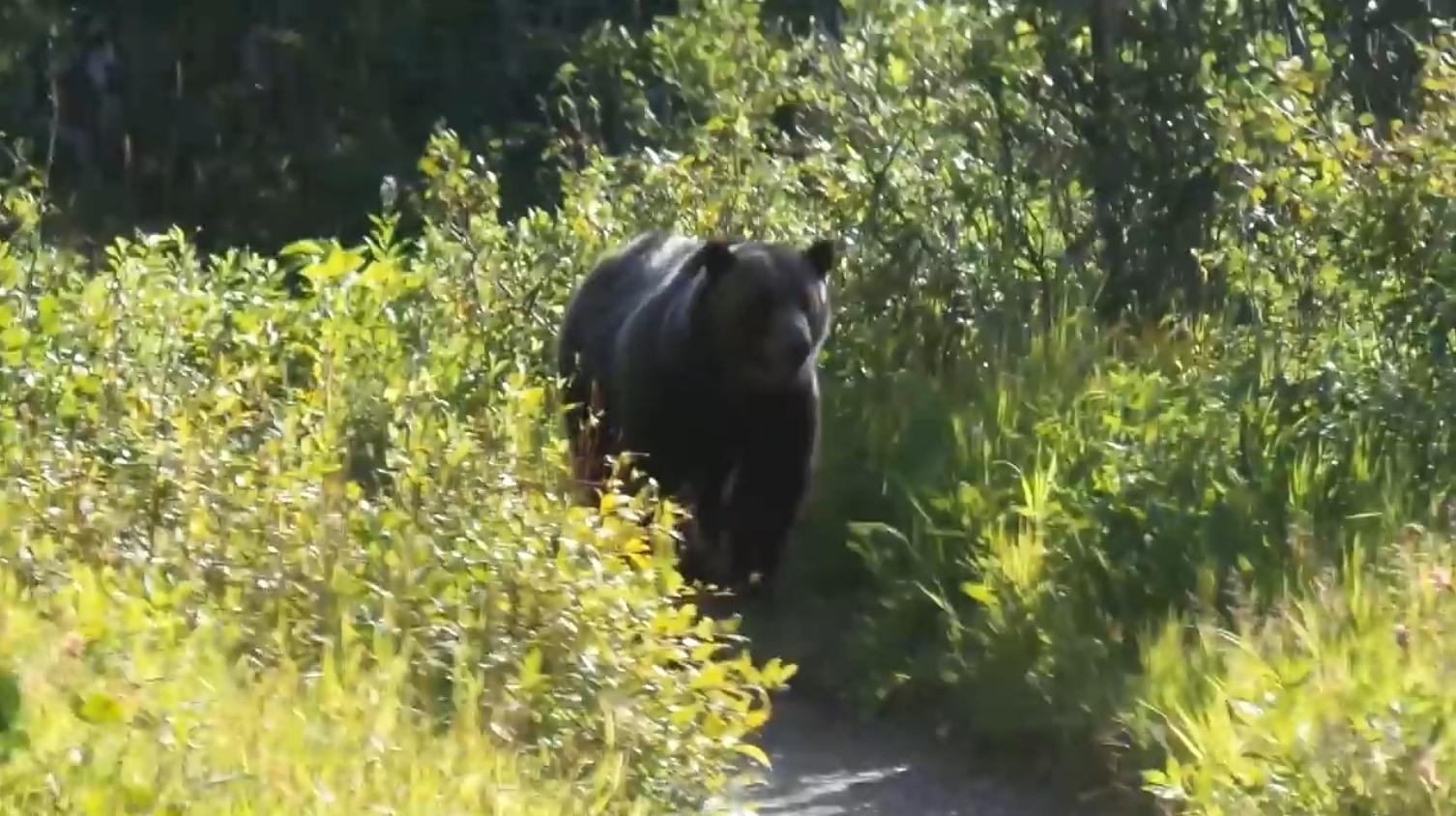 ハイキングをしていたら前方から巨大な熊が!生きた心地がしない。。