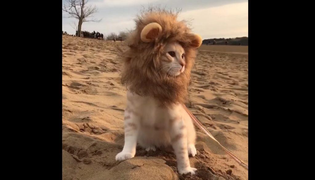 鳥取砂丘にライオン?!よく見たらちょっと小さかったw