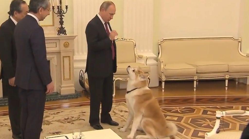 4年前に秋田県知事からプーチンに贈られた秋田犬「ゆめ」が大きく成長し、その姿を披露!!