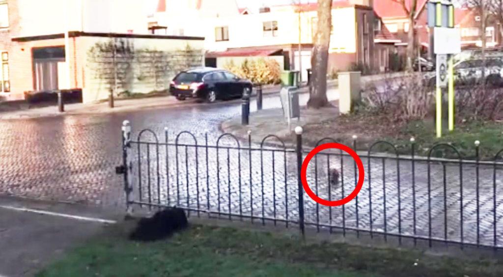 道にボールを仕掛ける犬。その目的が可愛すぎるwww