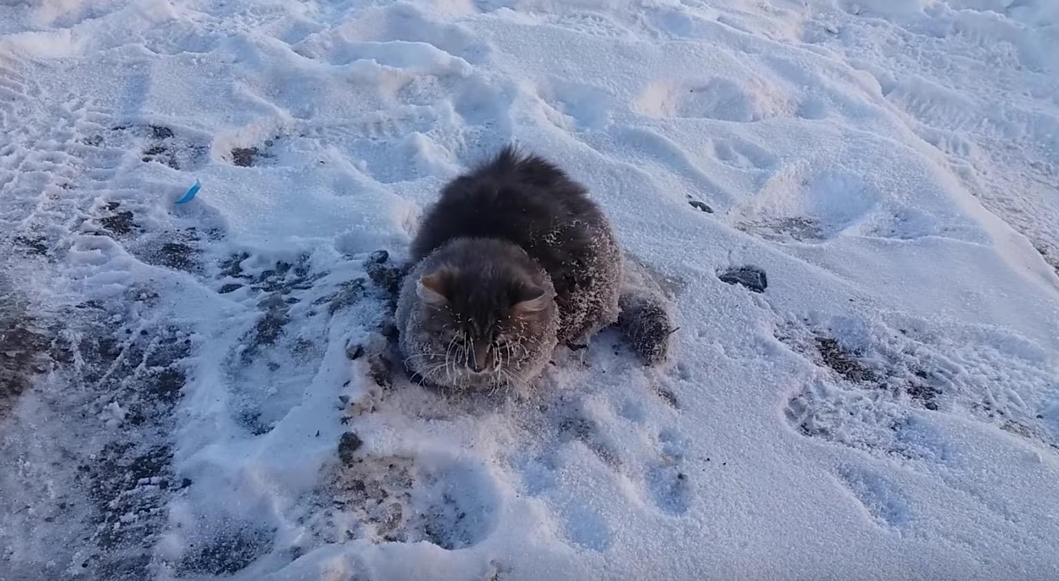 凍った路面に肉球が張り付き、凍結しかけていた猫。発見したカップルがある方法で救出!