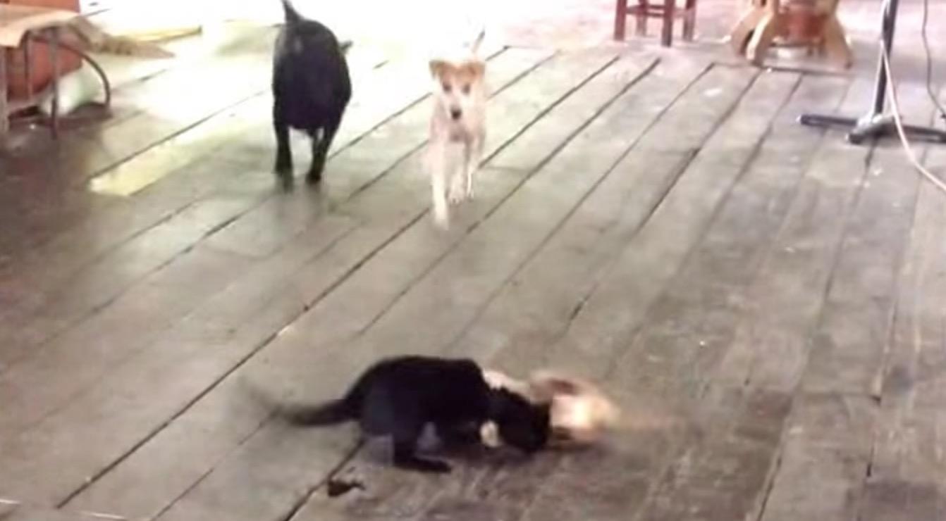 大ゲンカをする猫たち。すると2匹の犬が現れて、、