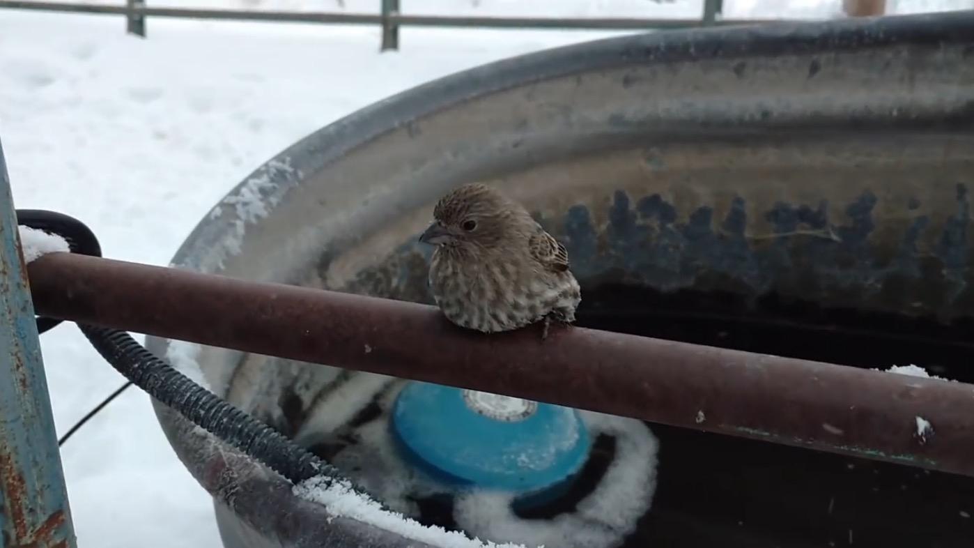 パイプに足が凍りつき、動けなくなったスズメを発見!男性が温かい吐息で救出!
