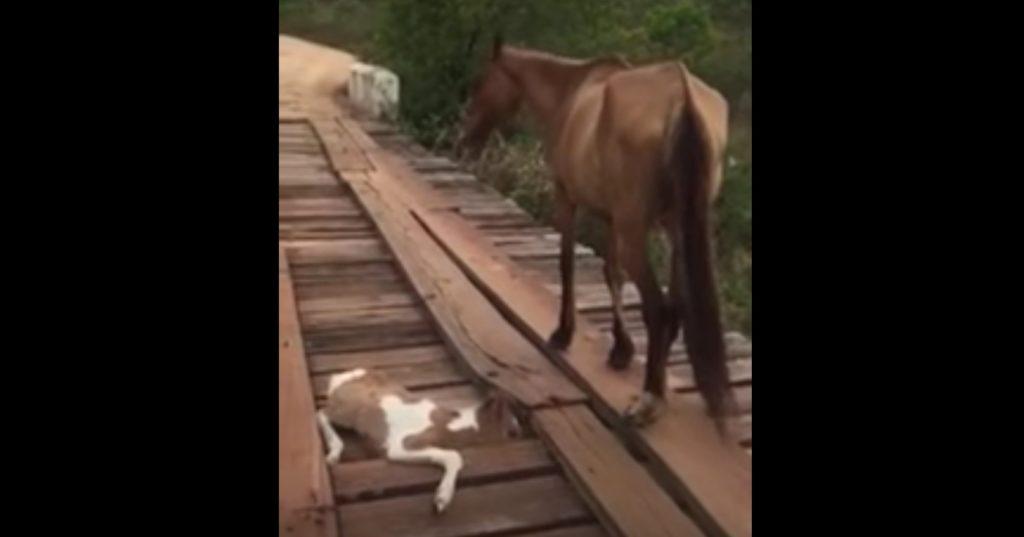 橋に挟まった子馬と、何もできない母馬。男性は危険をかえりみず救助に当たる