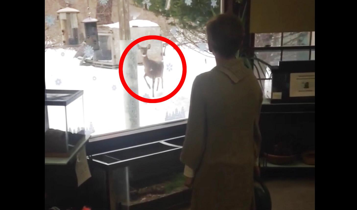 野生の鹿が女性の動きをマネする驚きの映像!