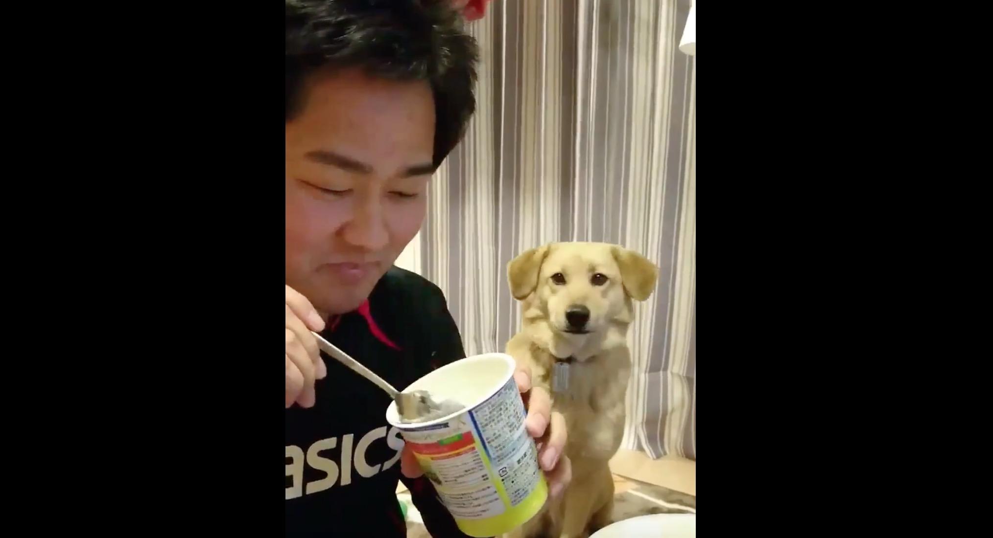 「いや、別に食べたくないけど?」息ぴったり!ご主人が振り返るたび、知らんぷりをする犬(笑)