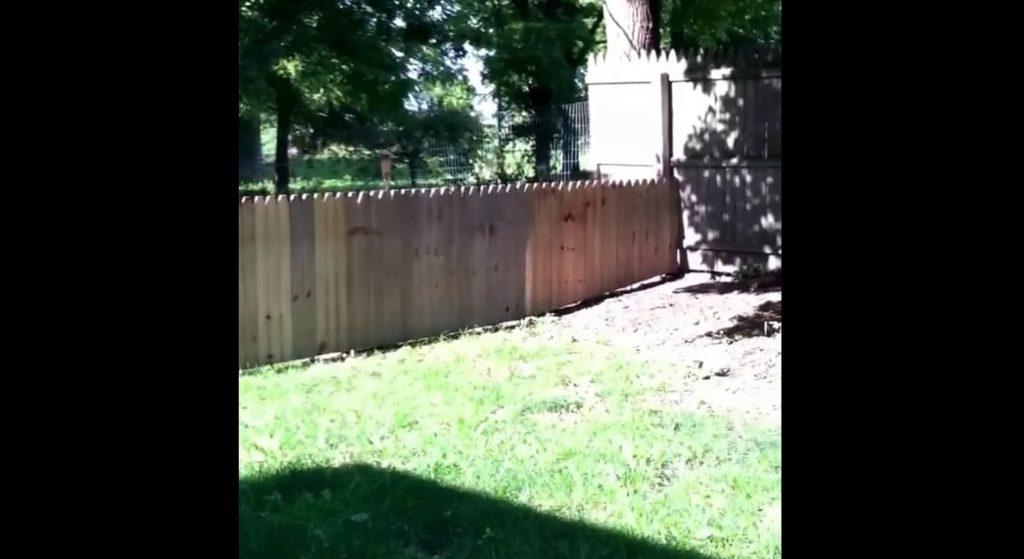 新設した飼い犬の脱走防止フェンスを自慢していたら、爆笑の展開に笑