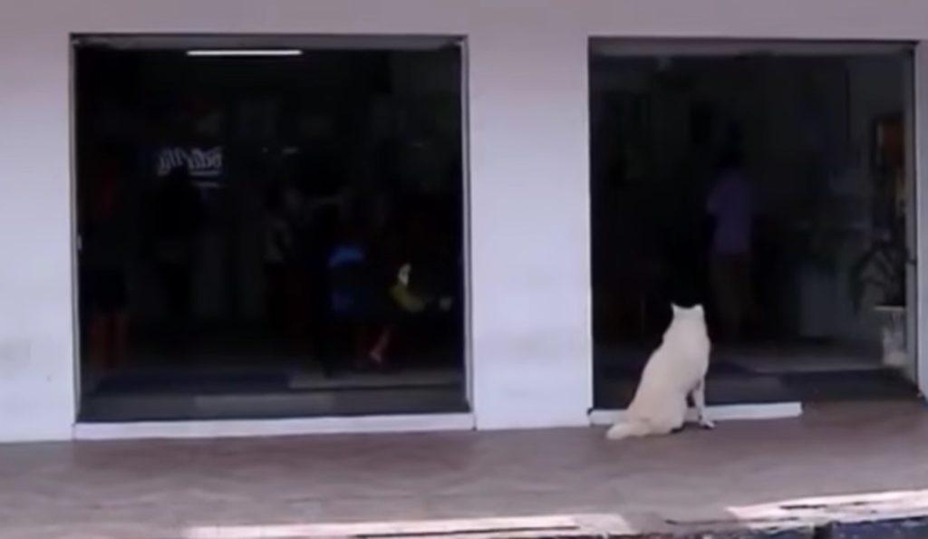 切ない、、飼い主が亡くなった後も、毎日同じ道を散歩し続ける秋田犬