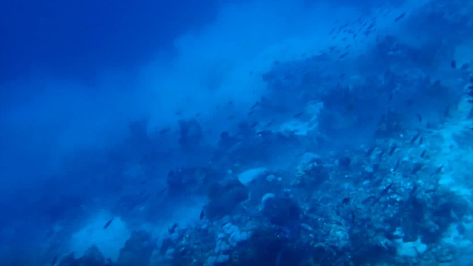 ダイビング中に大きな地震に遭遇した映像が公開。魚たちもパニックに!