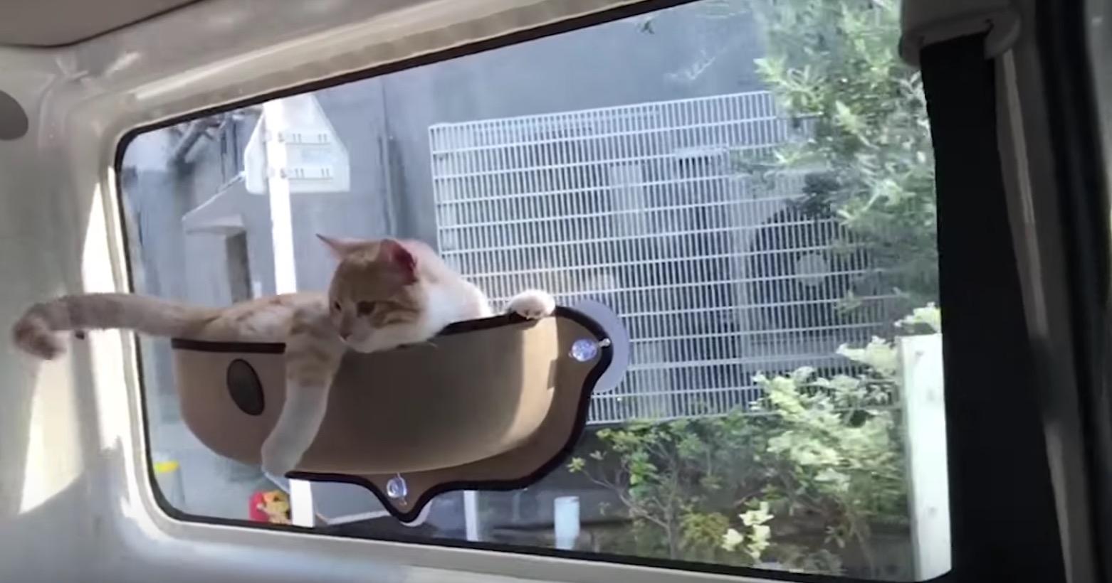 快適にゃん!「猫ホルダー」で快適ドライブを満喫する猫さん