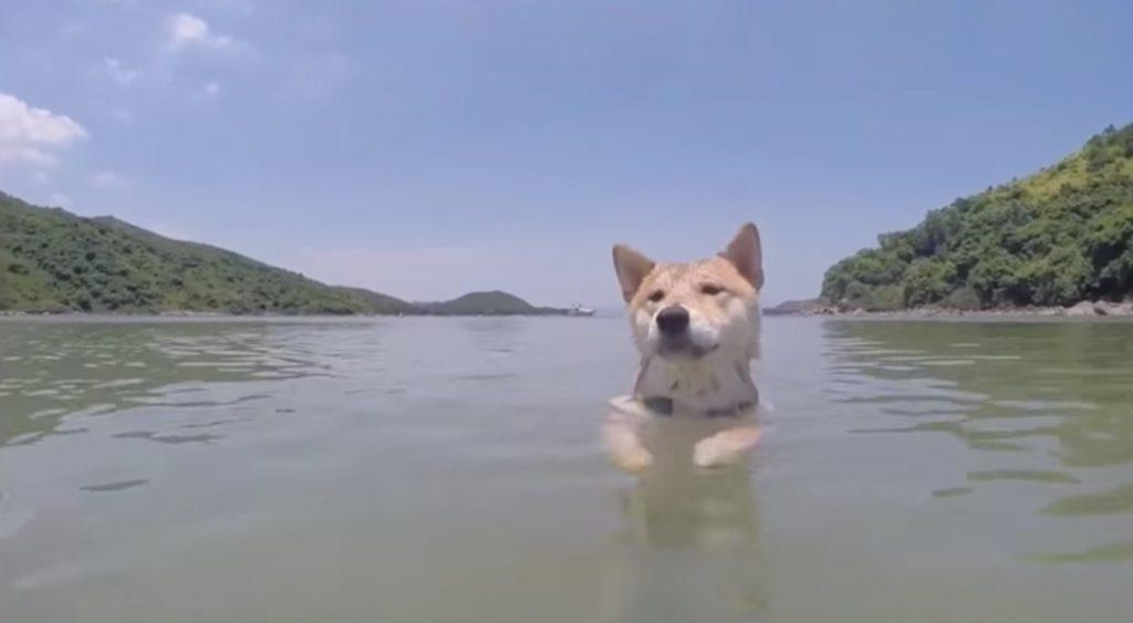犬が気持ち良さげに泳いできた!しかし水中をのぞいてみたら。。笑