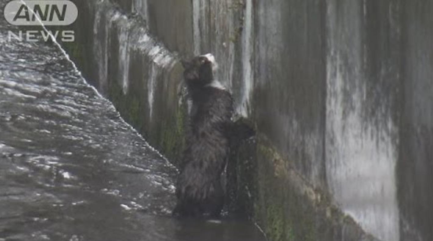 長崎の大雨で、川に落ちてずぶ濡れの猫が消防隊員に救助される