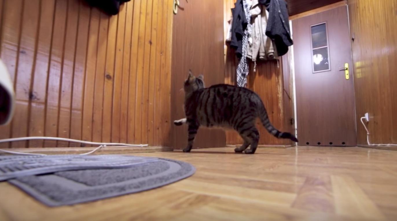 飼い主さんが出かけて行くと寂しそうな猫。しかし帰って来たことがわかると、、!その反応に癒される