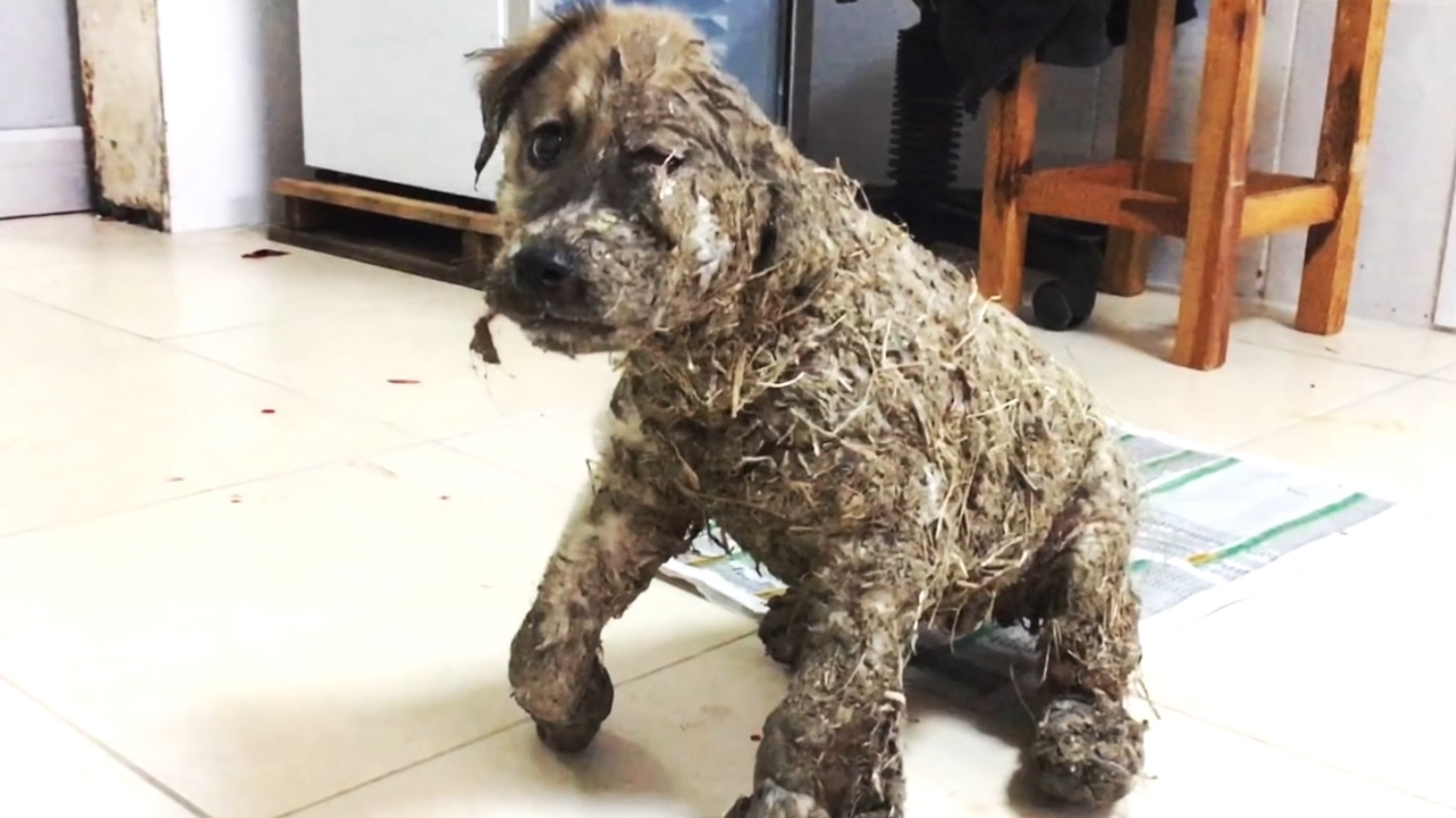 いたずらで「接着剤」で固められてしまった子犬