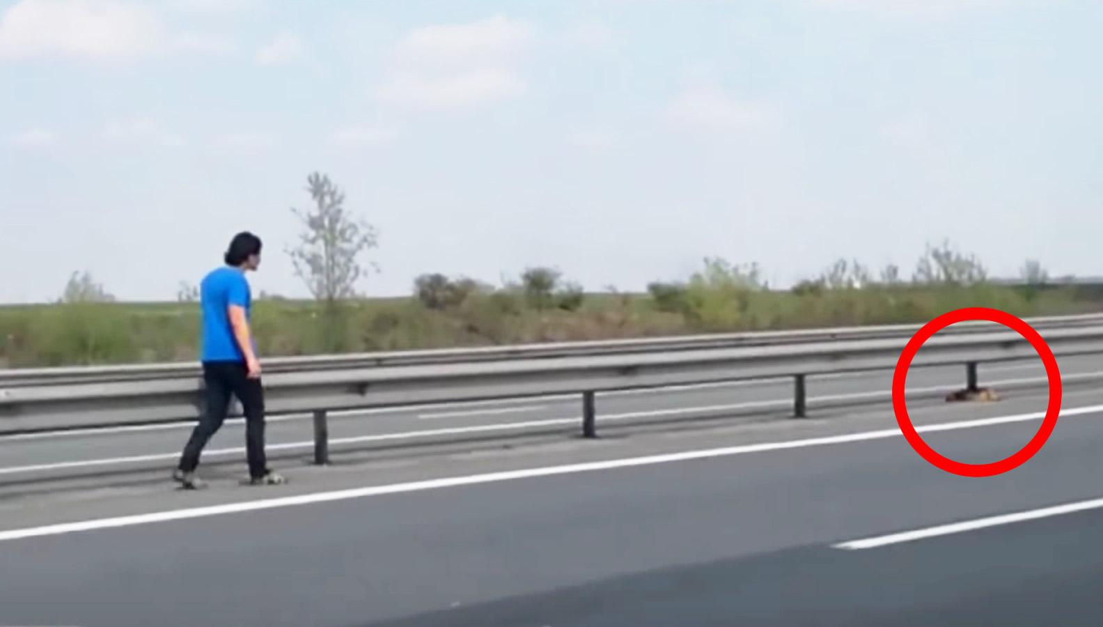 往来の激しい高速道路を歩く男性。その視線の先には動物が、、!