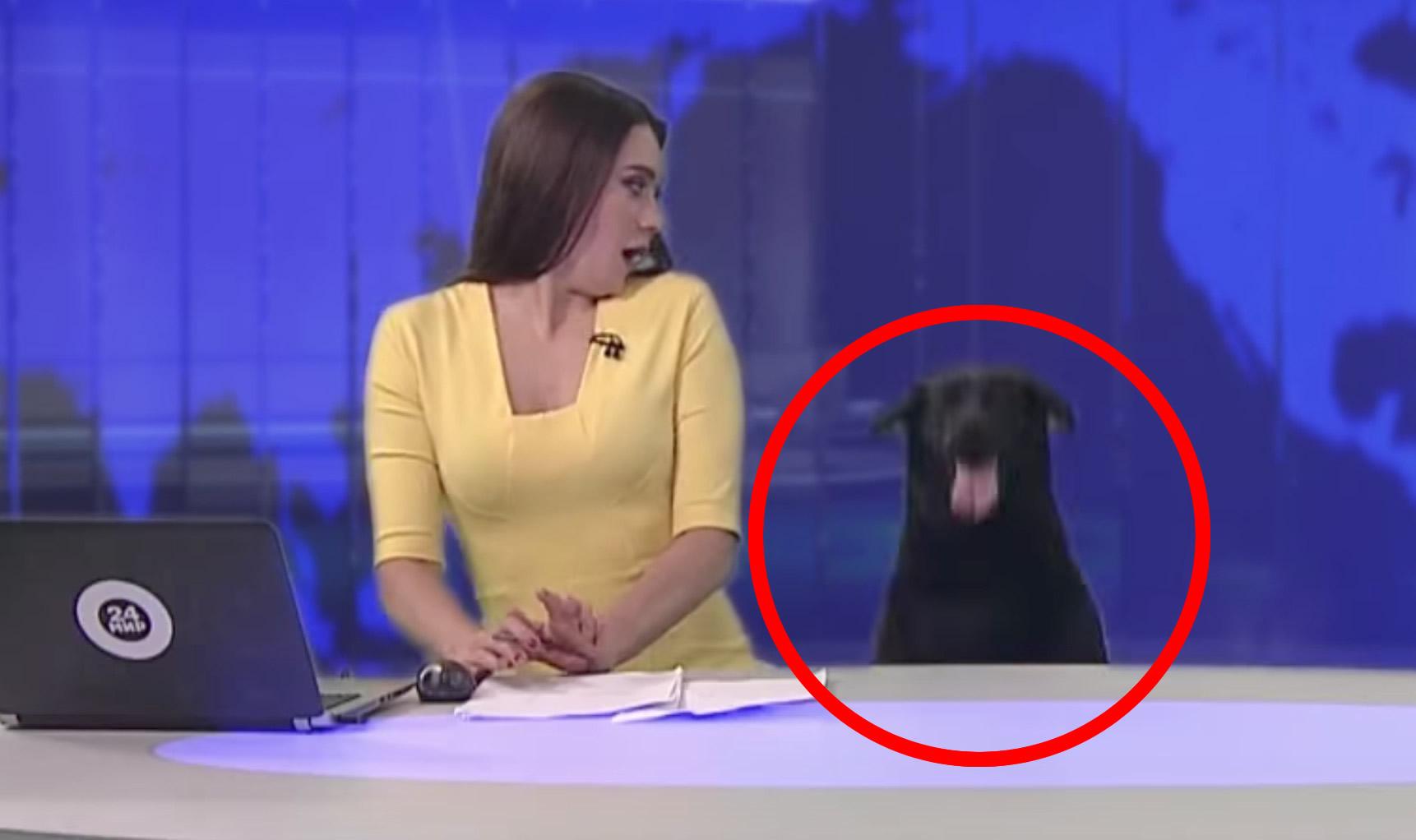 放送事故、、?真面目そうなニュースの途中でいきなり犬が!ニュースどころじゃない^ ^;