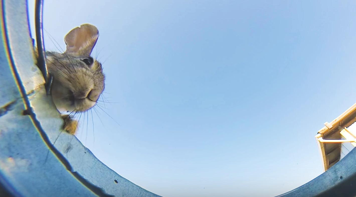 バケツの中にカメラを置いたら、水飲みに来たいろいろな生き物の顔が撮れた!