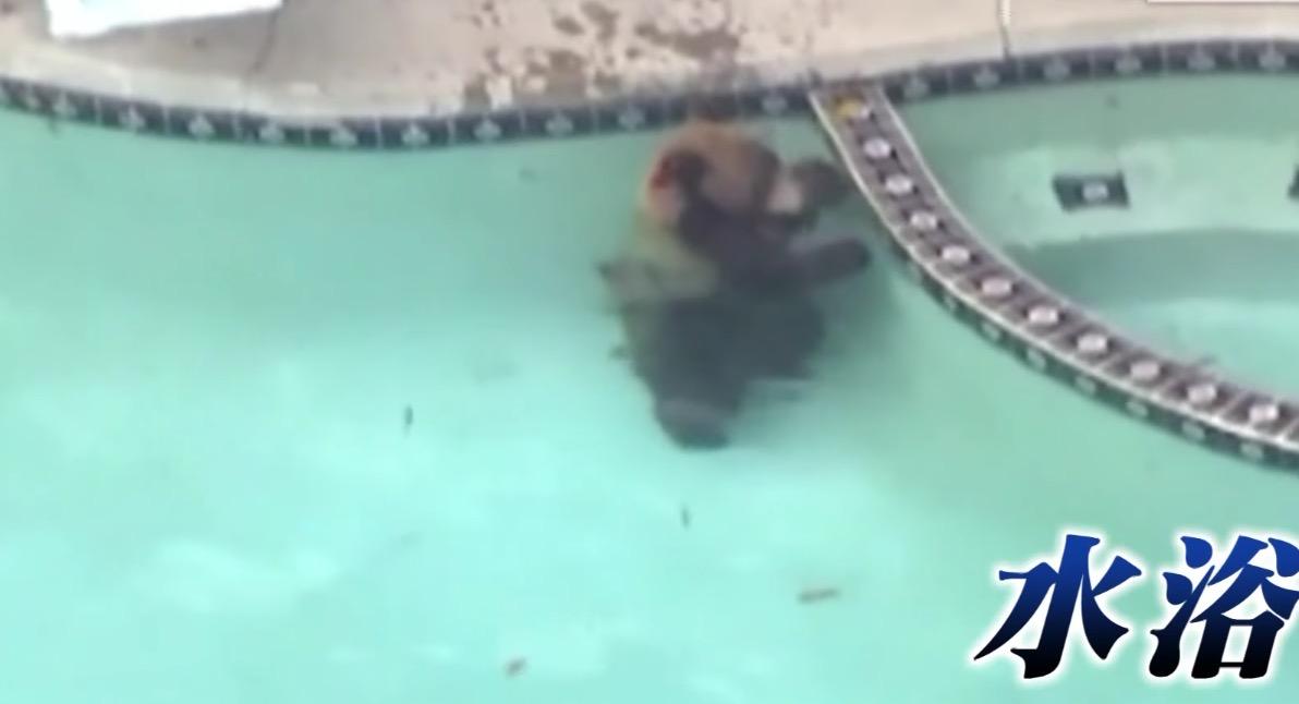 庭に侵入してやりたい放題の巨大熊。それを見た飼い犬の行動にびっくり!