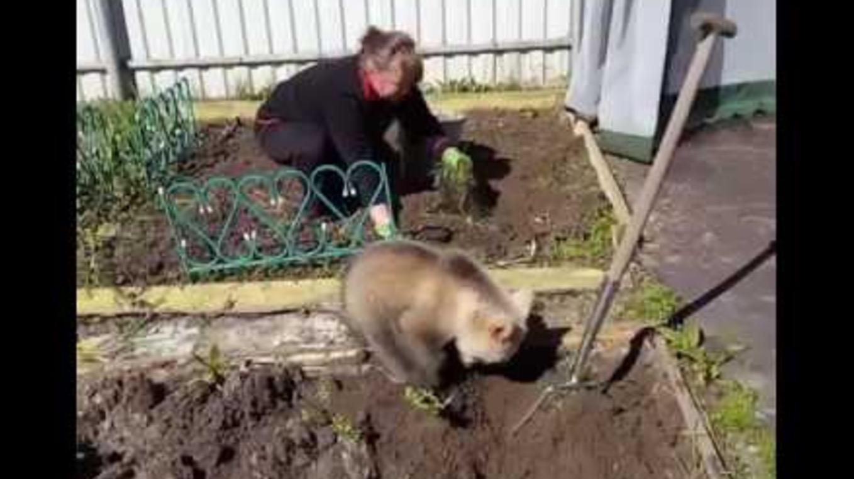 「手伝うクマー!」一生懸命に畑仕事のお手伝いをする小熊がかわいい笑