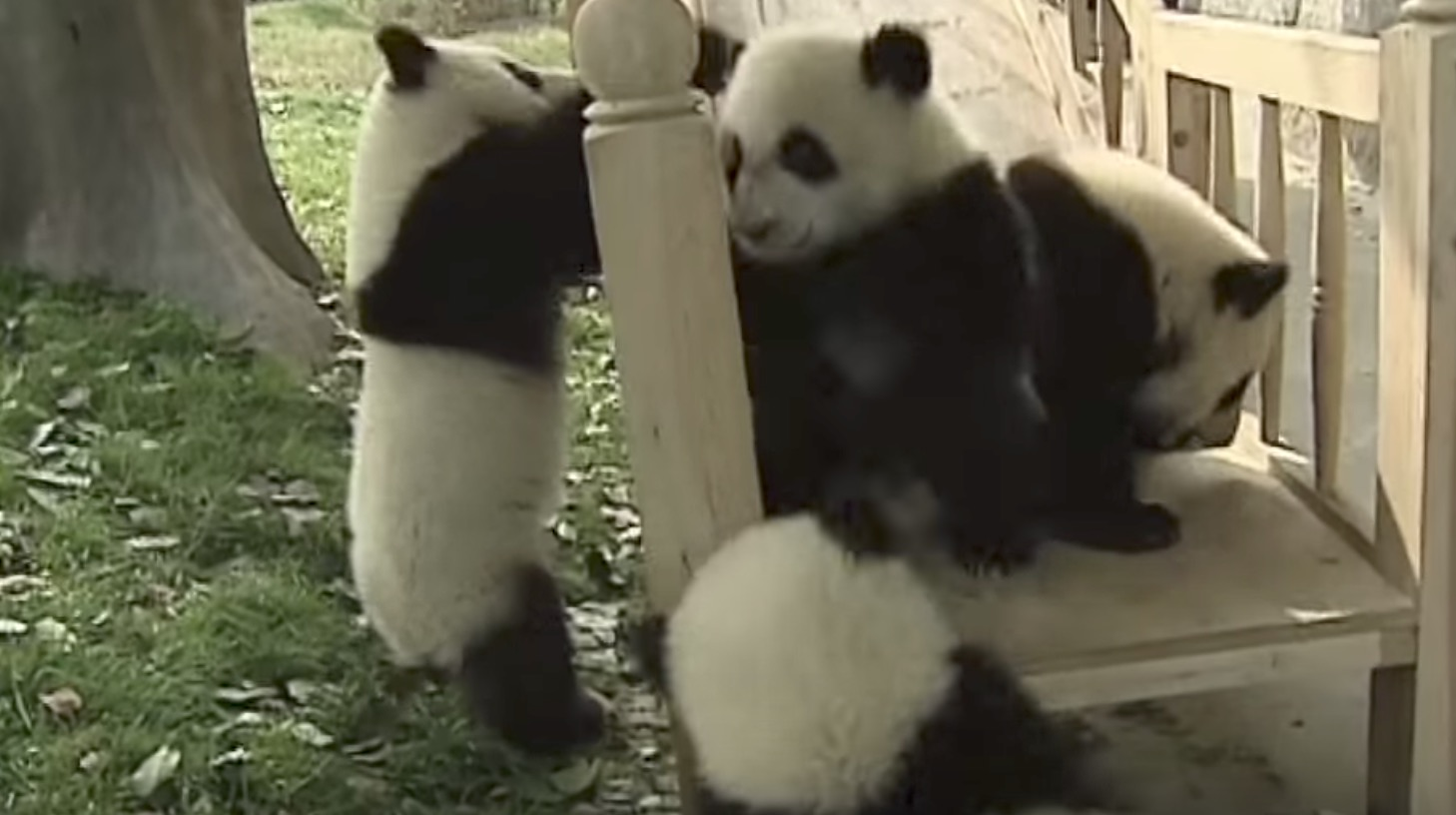 新しい「すべり台」をもらったパンダ。はしゃぎっぷりが可愛い笑