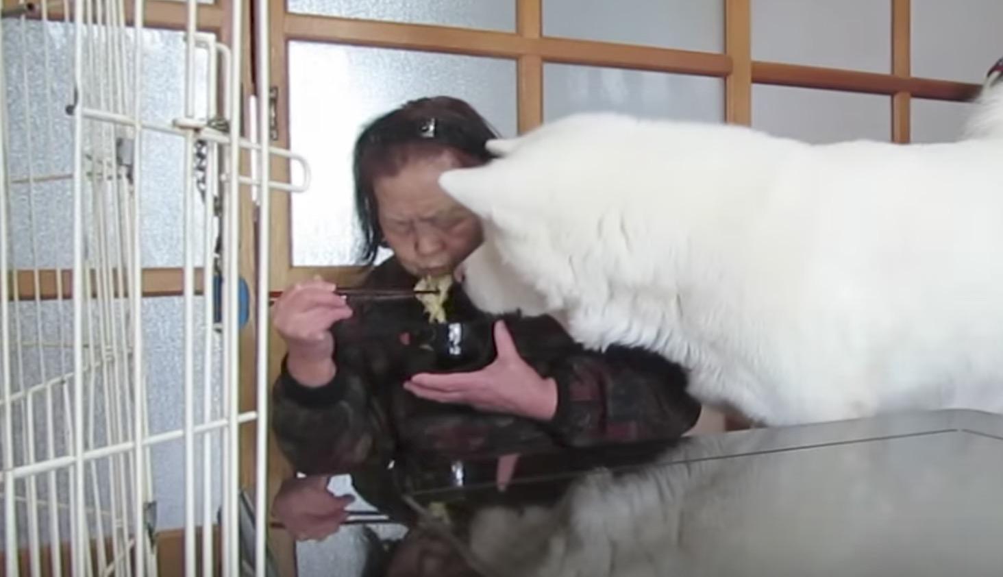 食事中のおばあちゃんに「無言の圧力」をかける秋田犬、、笑