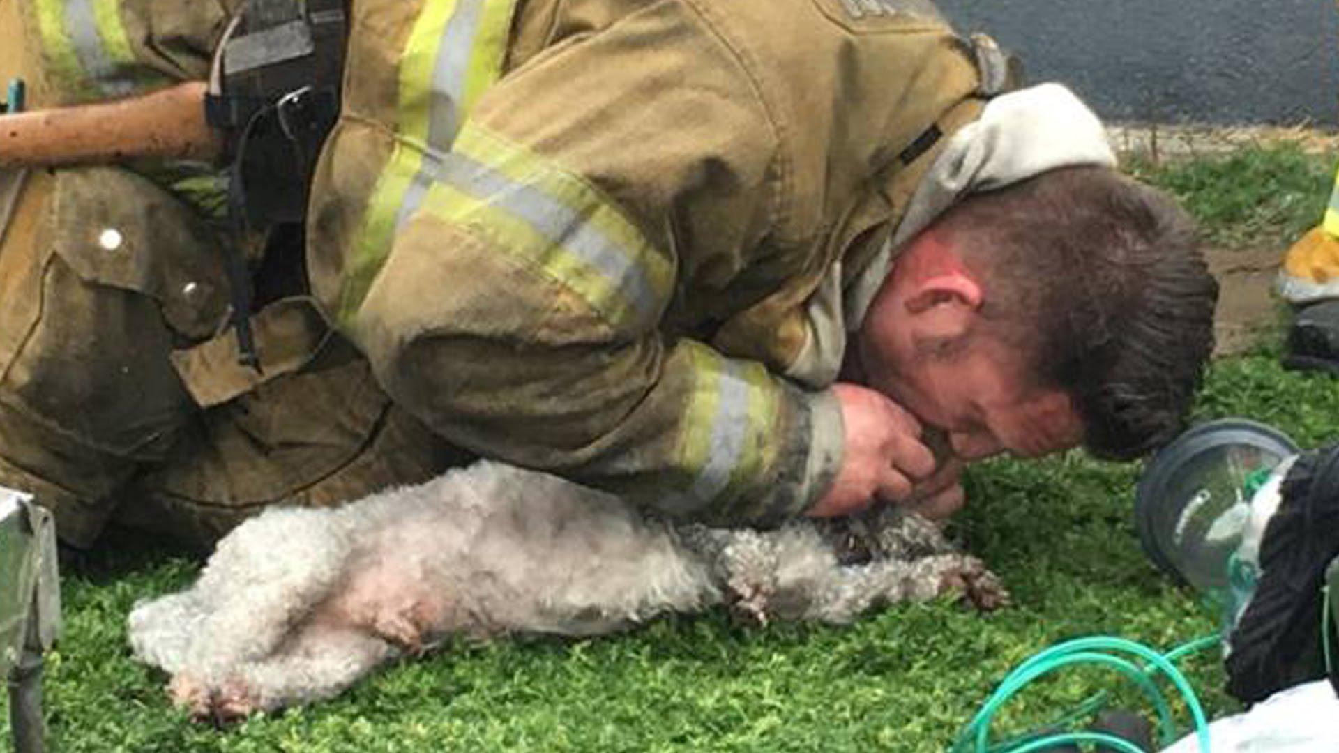 火災で瀕死の犬。消防士の懸命な蘇生処置で一命を取り止める!その後のコメントがかっこいい。