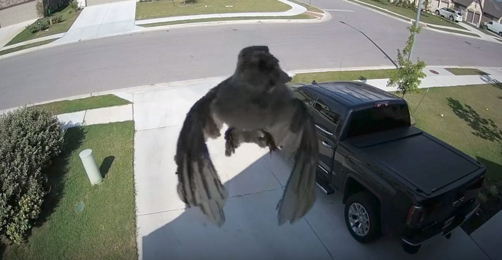 鳥の羽ばたきとカメラのフレームレートが一致した結果、世にも不思議な映像が撮影される!