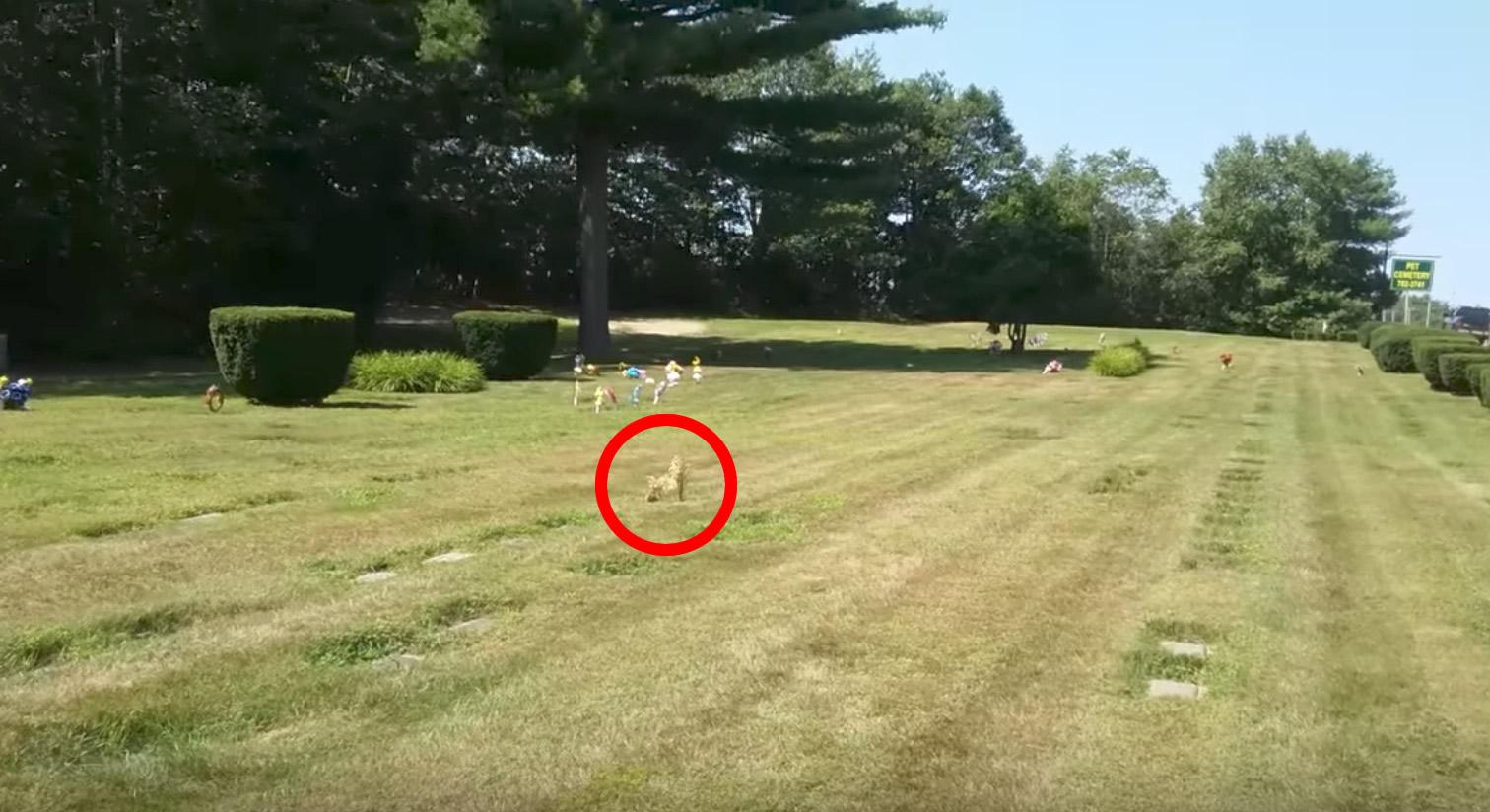 【奇跡】亡くなった愛犬の墓の上に「犬」の姿が!近づいてみてその正体にびっくり