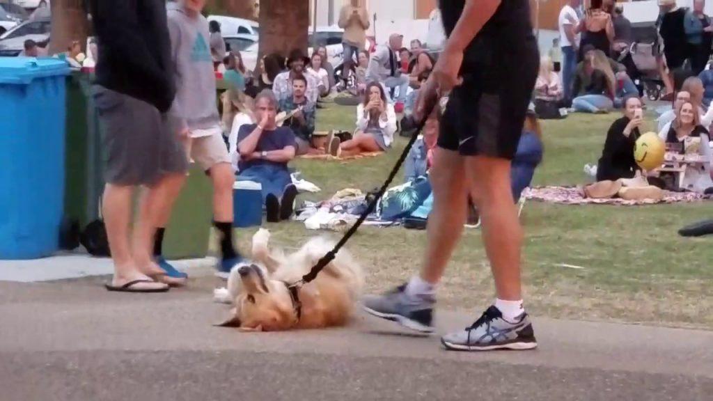 「絶対に帰りたくない」とダダをこねた犬が、一瞬で帰りたくなった作戦が目からウロコ