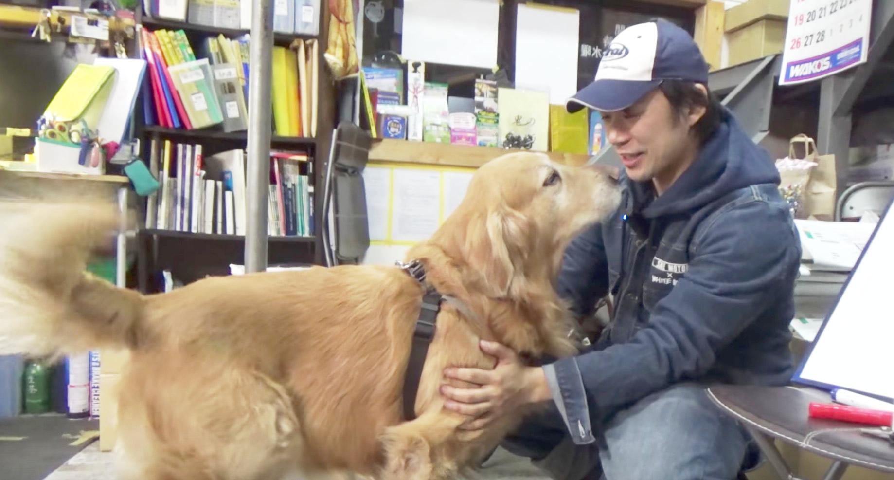 初対面の犬の正しい触り方。初めての犬を触るときに気をつけること
