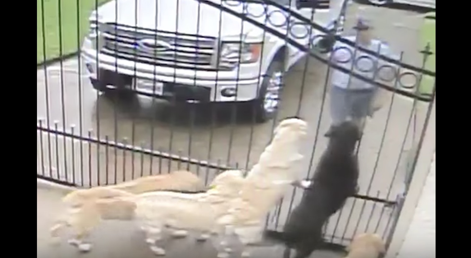 監視カメラで、郵便配達人と自分の家の犬が仲良しなことが判明し話題に!