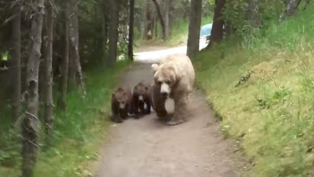 歩いていたら前方から熊の母子が、、恐怖のハイキングが開始。。