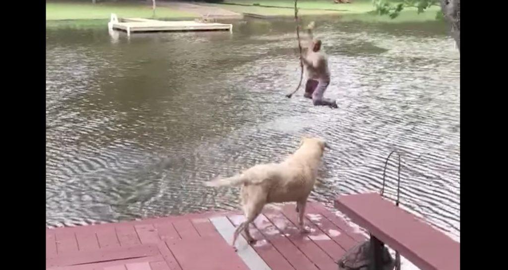 川に落ちた飼い主さん。それを見た犬の勇敢な行動に感動!