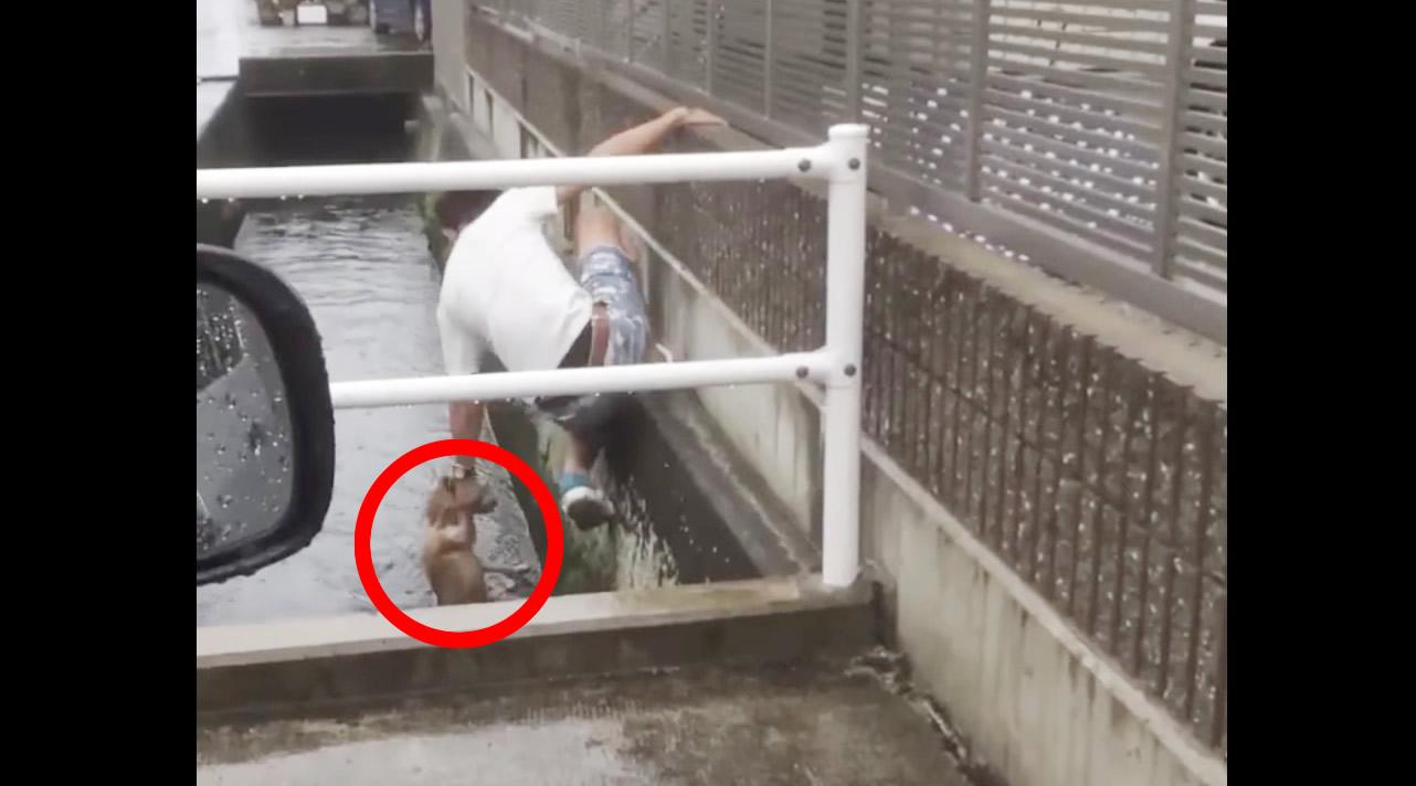 【日本】若者が溺れかけた犬を救助!しかし「偽善」「助け方が雑」の声
