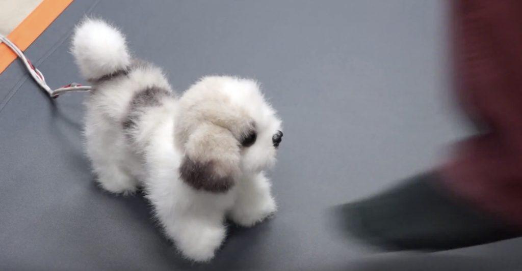 【日本】足が臭いと気絶する犬型ロボット。誰だこんなの考えたのは笑