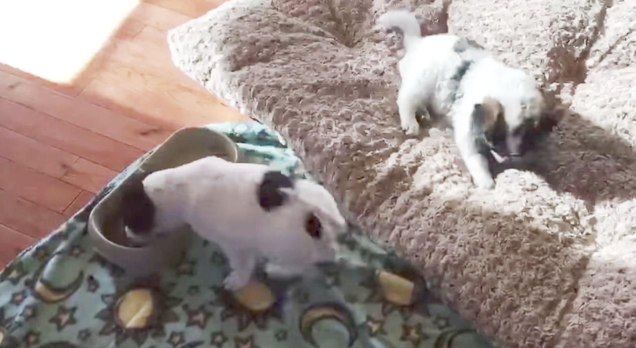 救助された子犬が、食事を踊りながら食べる。今がどれだけ幸せなのかよくわかる
