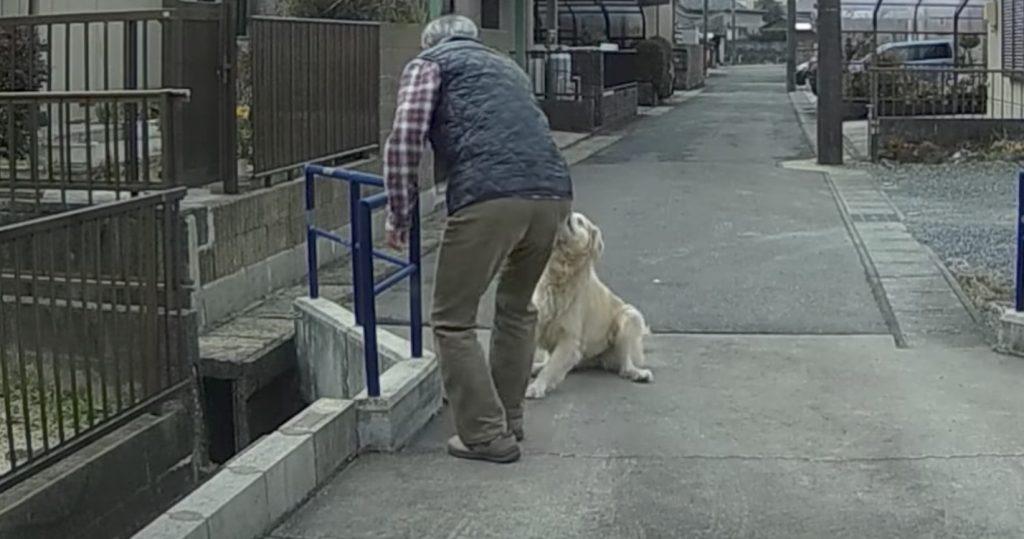 車の進路を塞ぐ飼い犬。どかそうとすると嫌がったので必殺技で強制排除に笑