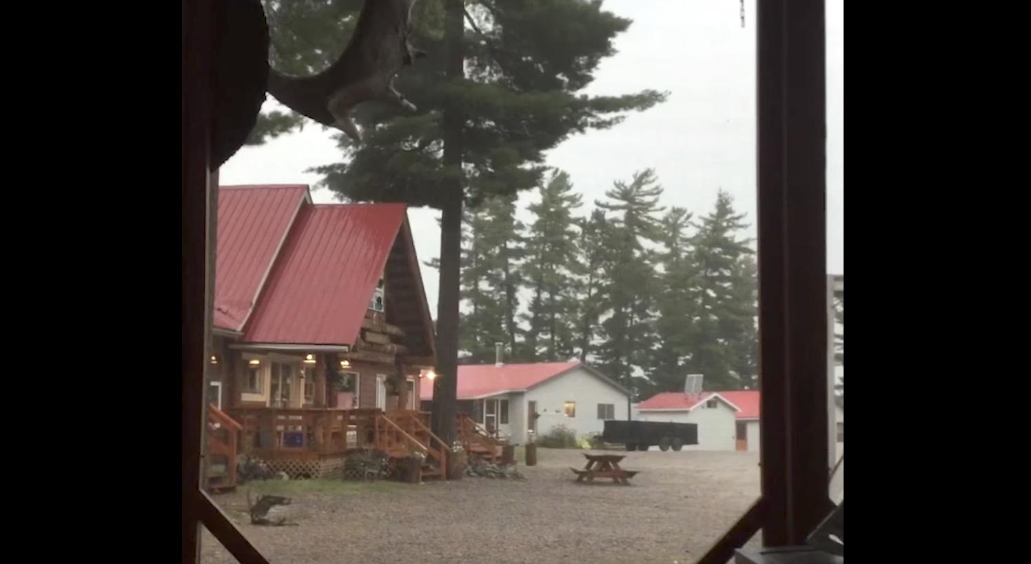 雷の威力ヤバすぎ。。大きな木が一撃で木っ端微塵に!