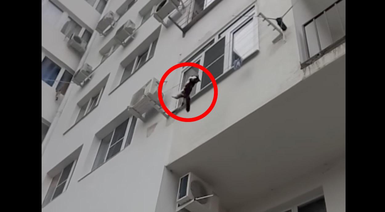 マンションから落ちてきた猫を男性がナイスキャッチ!