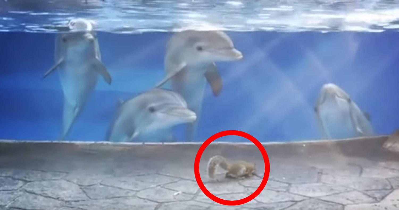 リスに興味津々のイルカたちの映像が話題に!