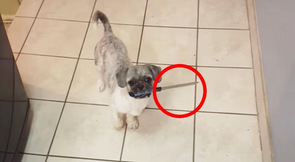 ナイフを持った「犬強盗」が現れ、飼い主さんもびっくり!!