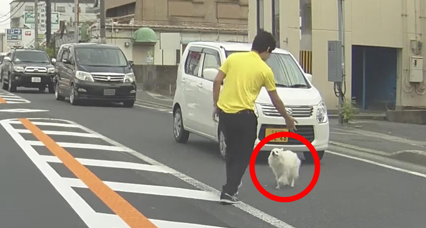 【日本】路上に今にも轢かれそうな犬が!しかし優しいドライバーが車を止め救助!