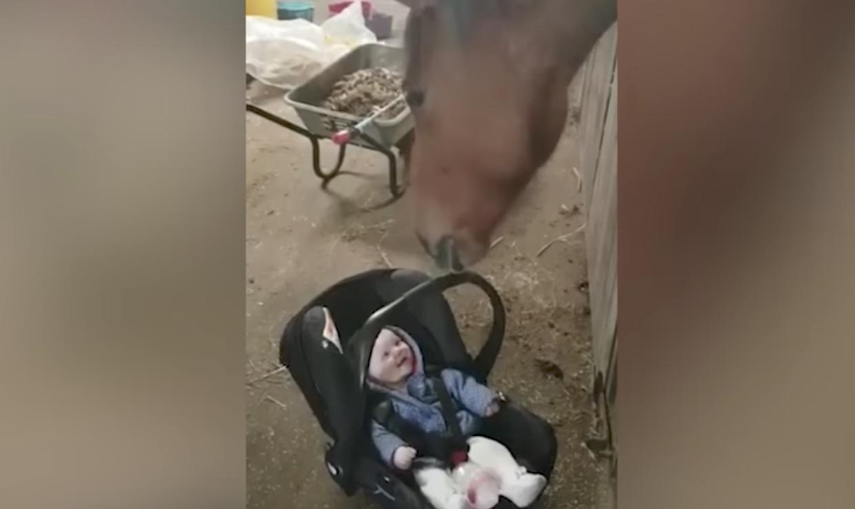 泣いていた赤ちゃんを笑顔にした紳士な馬^ ^