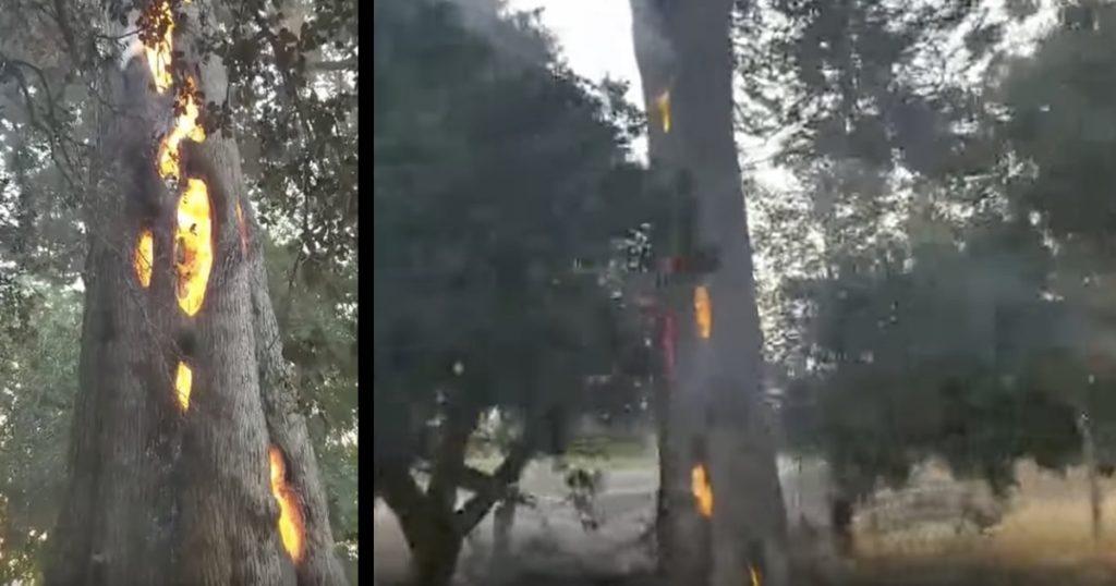 カリフォルニアの山火事で、内部だけが燃える不思議な木が撮影され話題に!