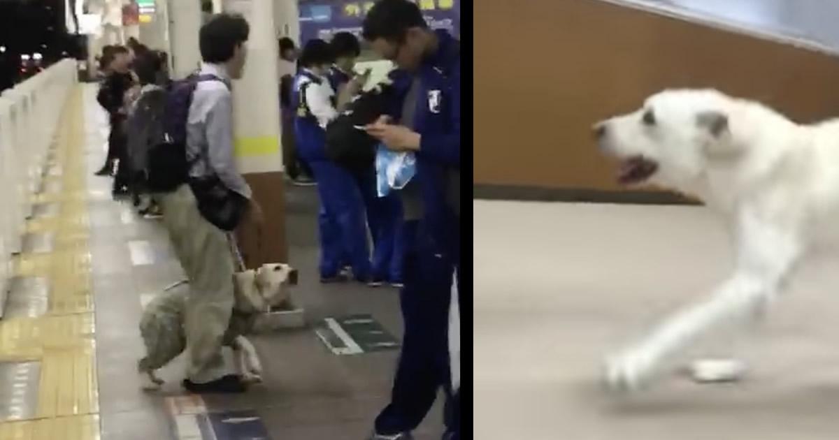 パートナーに蹴られた盲導犬、無事保護され嬉しそうに駆け回る姿が公開!