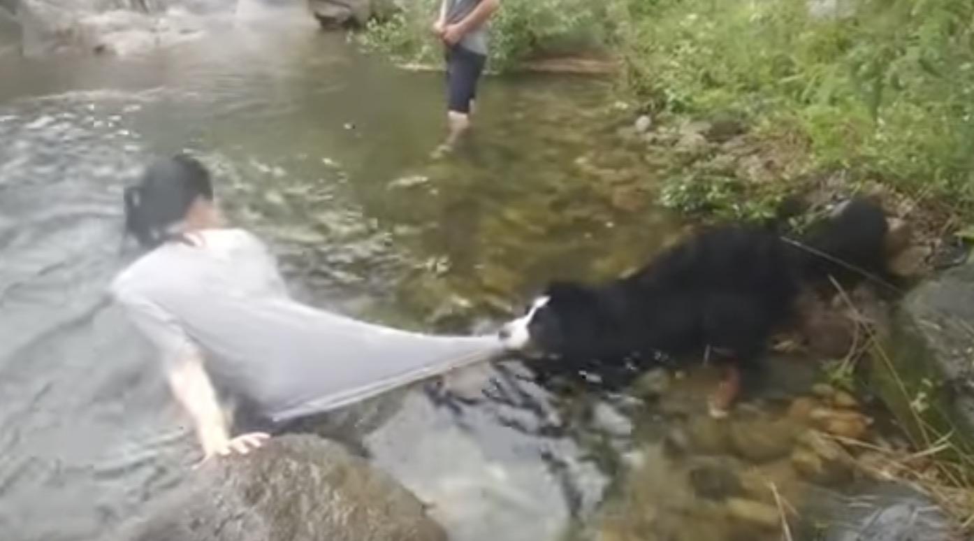 「危ないから絶対ダメ!」川遊びを心配する犬が可愛い笑
